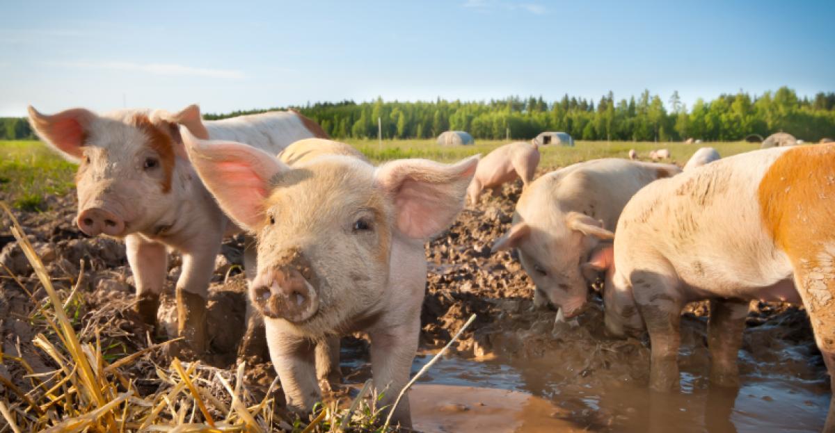 [E-BOOK] Guia da carne orgânica: Tudo o que você precisa saber